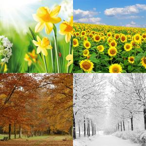 4-seizoenen dekbedden